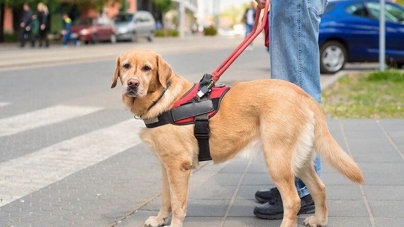 Las personas con trastornos diabéticos o epilépticos también podrán ir acompañados de su perro de apoyo
